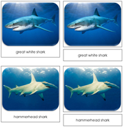 Sharks Safari Toob Cards - Printable Montessori Toob Cards by Montessori Print Shop.