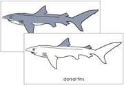 Shark Nomenclature Cards - Printable Montessori Nomenclature Materials for home and school.