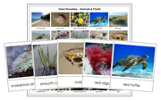 Types of Shoreline Animals and Plants - Printable Montessori Science Materials by Montessori Print Shop.