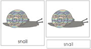 Snail Nomenclature Cards - Printable Montessori nomenclature cards by Montessori Print Shop.