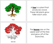 Tree Nomenclature Book (in red) - Printable Montessori Nomenclature Materials by Montessori Print Shop.