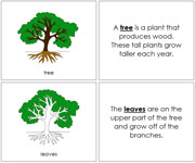 Tree Nomenclature Book - Printable Montessori Nomenclature Materials by Montessori Print Shop.