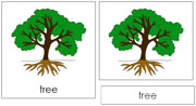 Tree Nomenclature Cards - Printable Montessori nomenclature cards by Montessori Print Shop.