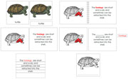 Turtle Definition Set (Red) - Printable Montessori materials by Montessori Print Shop.