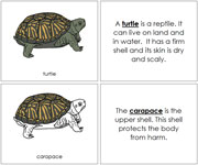 Turtle Nomenclature Book - Printable Montessori Nomenclature Materials by Montessori Print Shop.