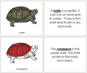 Turtle Nomenclature Book (in red) - Printable Montessori Nomenclature Materials by Montessori Print Shop.