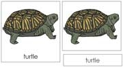 Turtle Nomenclature Cards - Printable Montessori nomenclature cards by Montessori Print Shop.