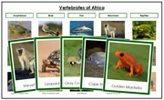 Africa Vertebrate Sorting (color borders) - Montessori Print Shop