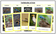 Asia Vertebrate Sorting (color borders) - Montessori Print Shop