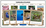 Australia Vertebrate Sorting (color borders) - Montessori Print Shop
