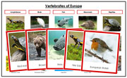 Europe Vertebrate Sorting (color borders) - Montessori Print Shop