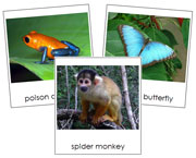Amazon Rainforest Animals - Printable Montessori Classified Cards by Montessori Print Shop.