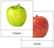 Apple Picture Cards - Printable Montessori materials by Montessori Print Shop.