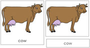 Cow Nomenclature Cards - Printable Montessori nomenclature cards by Montessori Print Shop.