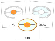 Egg Nomenclature Cards - Printable Montessori nomenclature cards by Montessori Print Shop.