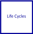 Life Cycle Nomenclature