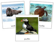 Marine Life Cards - Printable Montessori Classified Cards by Montessori Print Shop.