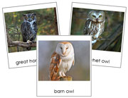 Owl Cards - Printable Montessori Classified Cards by Montessori Print Shop.