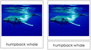 Whale Cards - Printable Montessori Classified Cards by Montessori Print Shop.