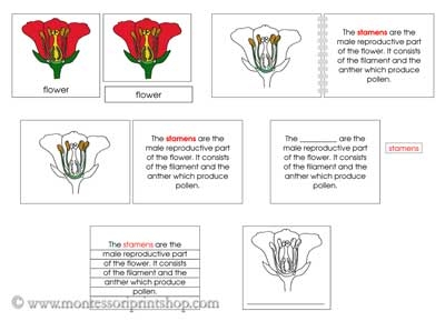 Number Names Worksheets montessori free printable materials : Flower Definition Set - Printable Montessori Nomenclature Materials