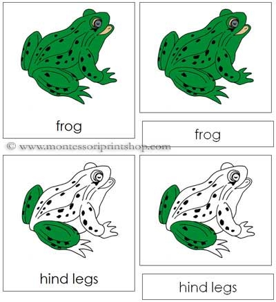 Number Names Worksheets montessori free printable materials : FREE Frog Nomenclature Cards: Montessori Parts of a Frog Cards